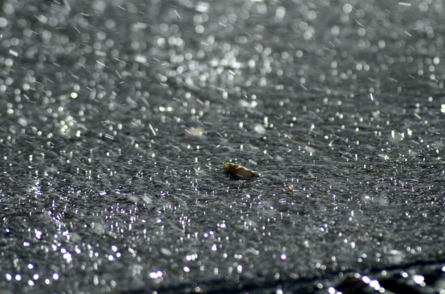 Rain Splashes Sparkling on Pavement