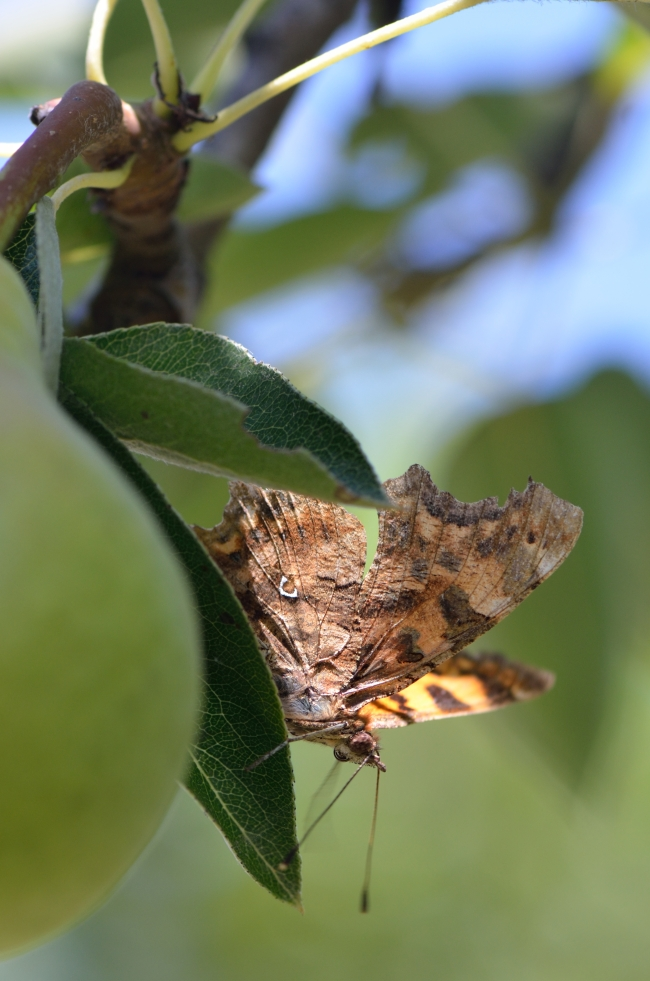 Brown Butterfly Sitting on a Leaf