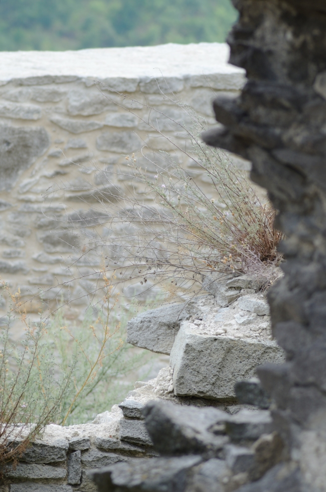 Dry Delicate Grasses Behind Enclosed Garden Wall