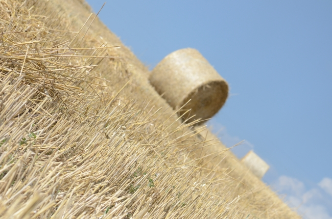 Field with Out of Focus Straw Bale