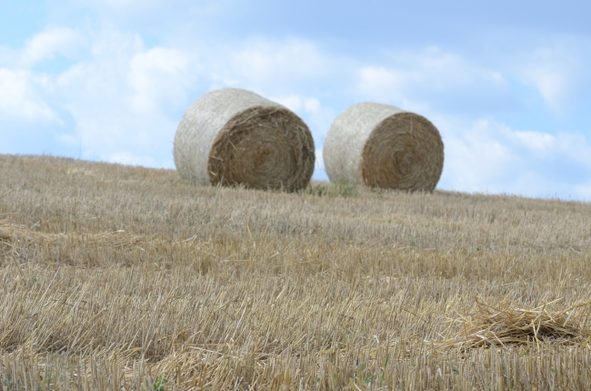 Open Field with Large Straw Bales