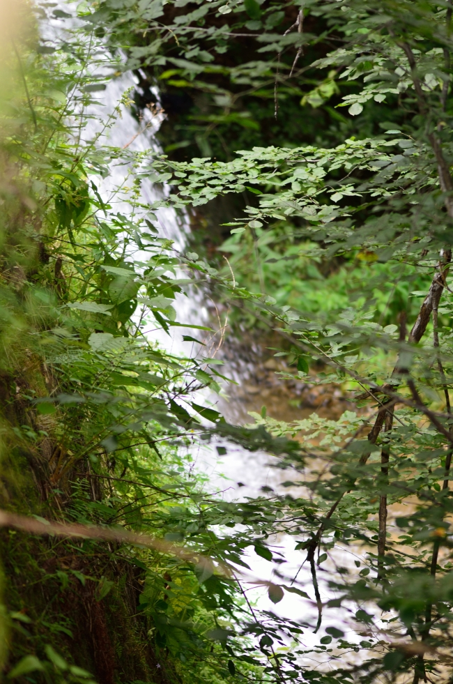 Cascade in the Mountains Covered by Vegetation