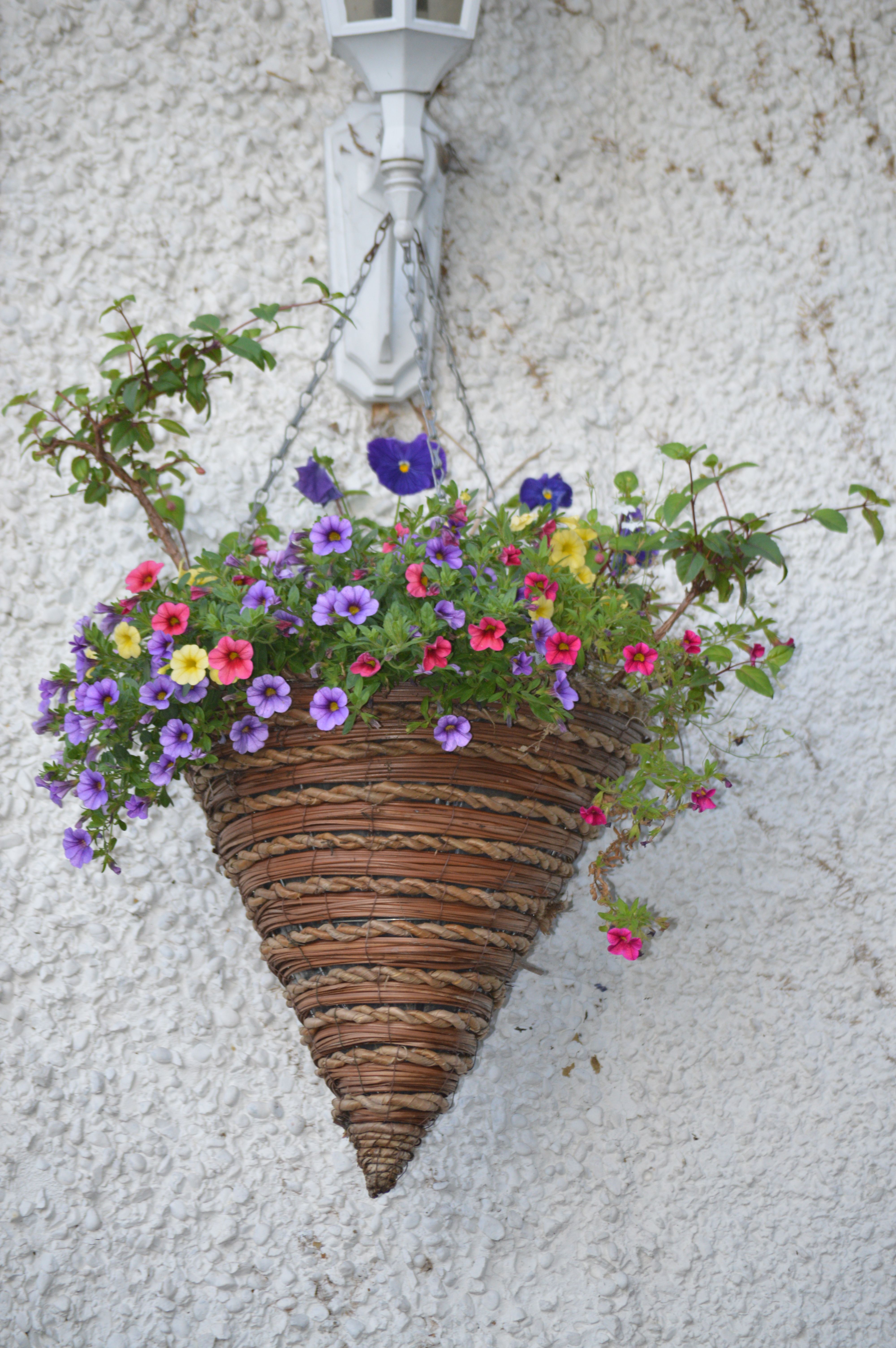 Hanging Flower Pot Flowers Cone Shaped Hanging Flower Pot With Small Flowers