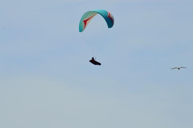 Paraglider Flying near a Bird under Deep Blue Sky