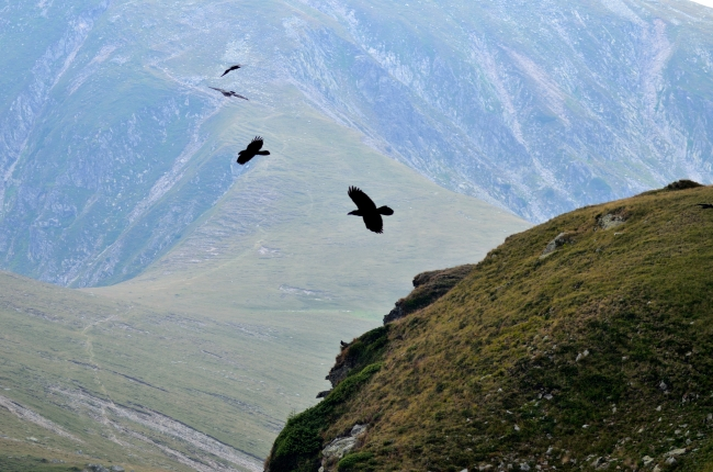 Hawks Flying over a Ridge