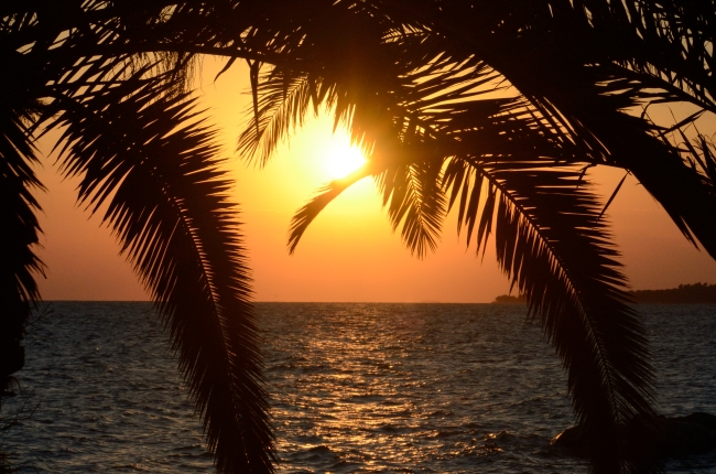 The Sun before Sunset Covered by Palm Tree Leaves