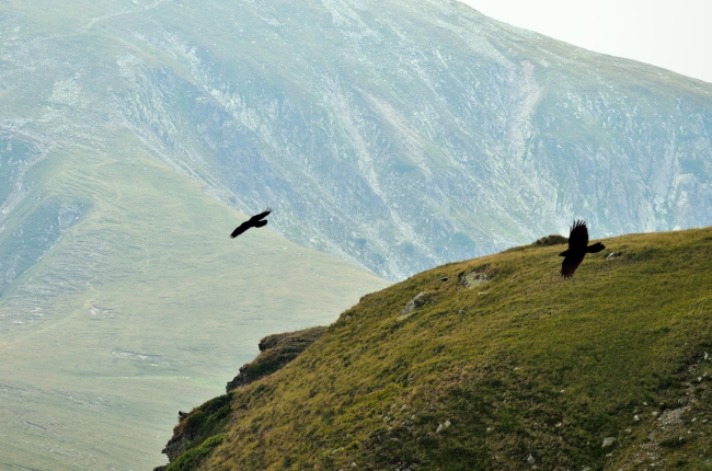 Hawks Flying over the Mountains