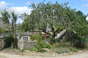 Apple Tree in front of a House