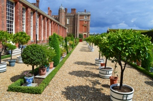 Flowers and Trees in Pots at Hampton Court