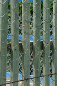 Fence Supporting a Chain-Link Fence