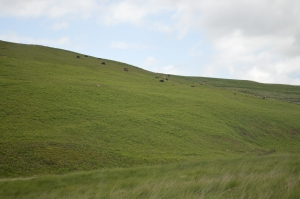 Hill with Cows Grazing on It