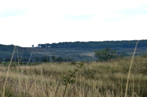 Forest Seen from the Distance