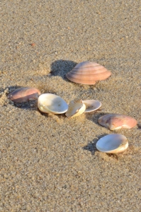 A Few Seashells on Sand
