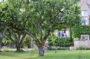 Stone House with a Apple Trees in front of It
