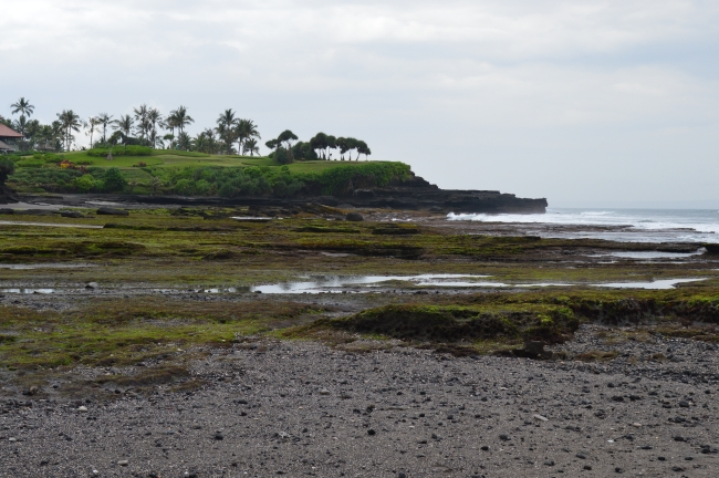 Cloudy Seashore with a Palm Tree Garden