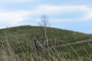 High Hill with White Bare Tree