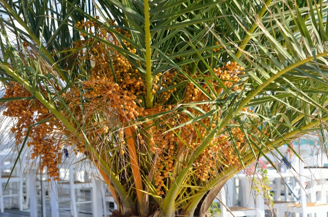 Ornamental Plant With Fruits