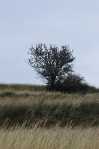 Hill with Solitary Tree in the Autumn