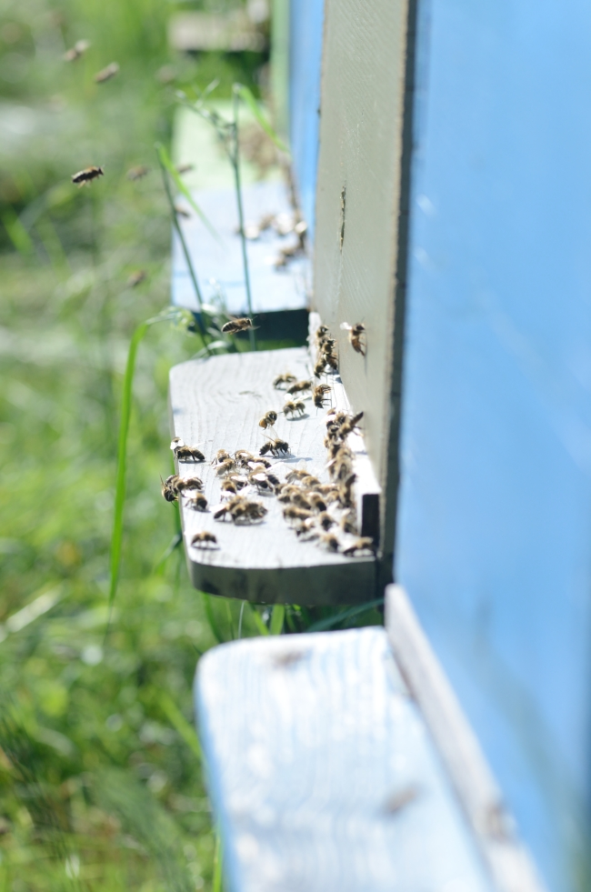 Dozens of Bees Resting on the Hive Entrance