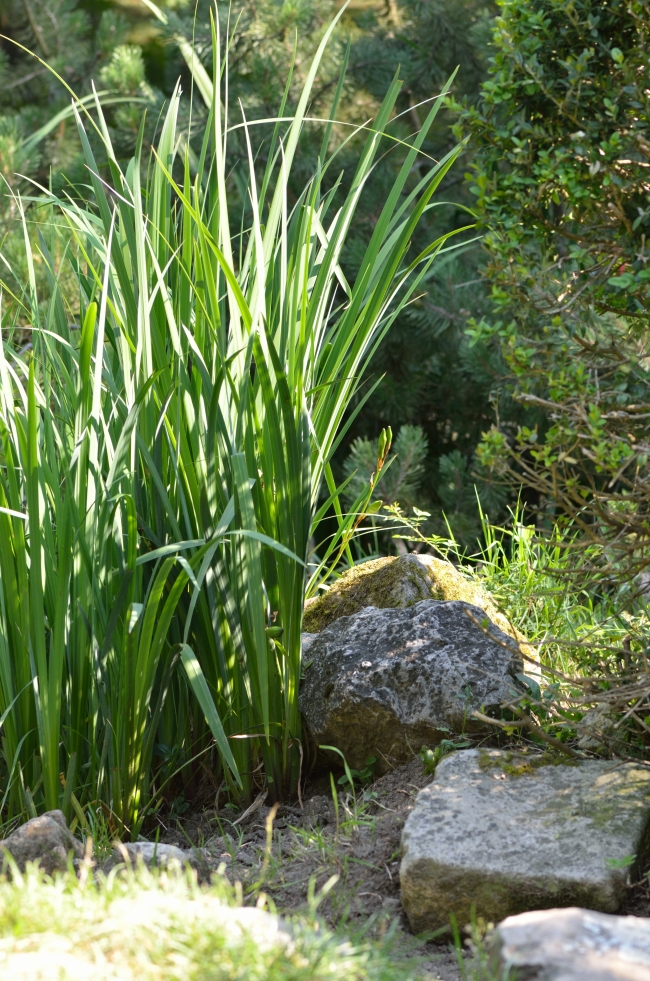 Corner of Nature with Stones and Grass in a Garden