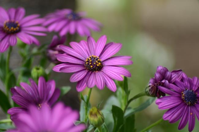 Purple Flowers after Rain