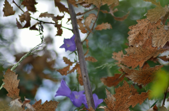 Fall colors and purple flowers.