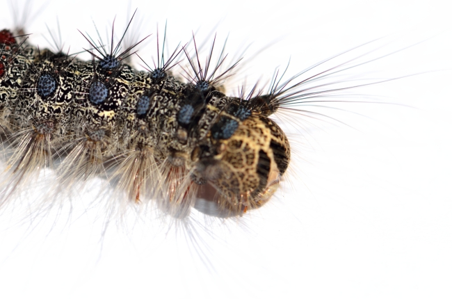 Colorful Fluffy Caterpillar on a Table