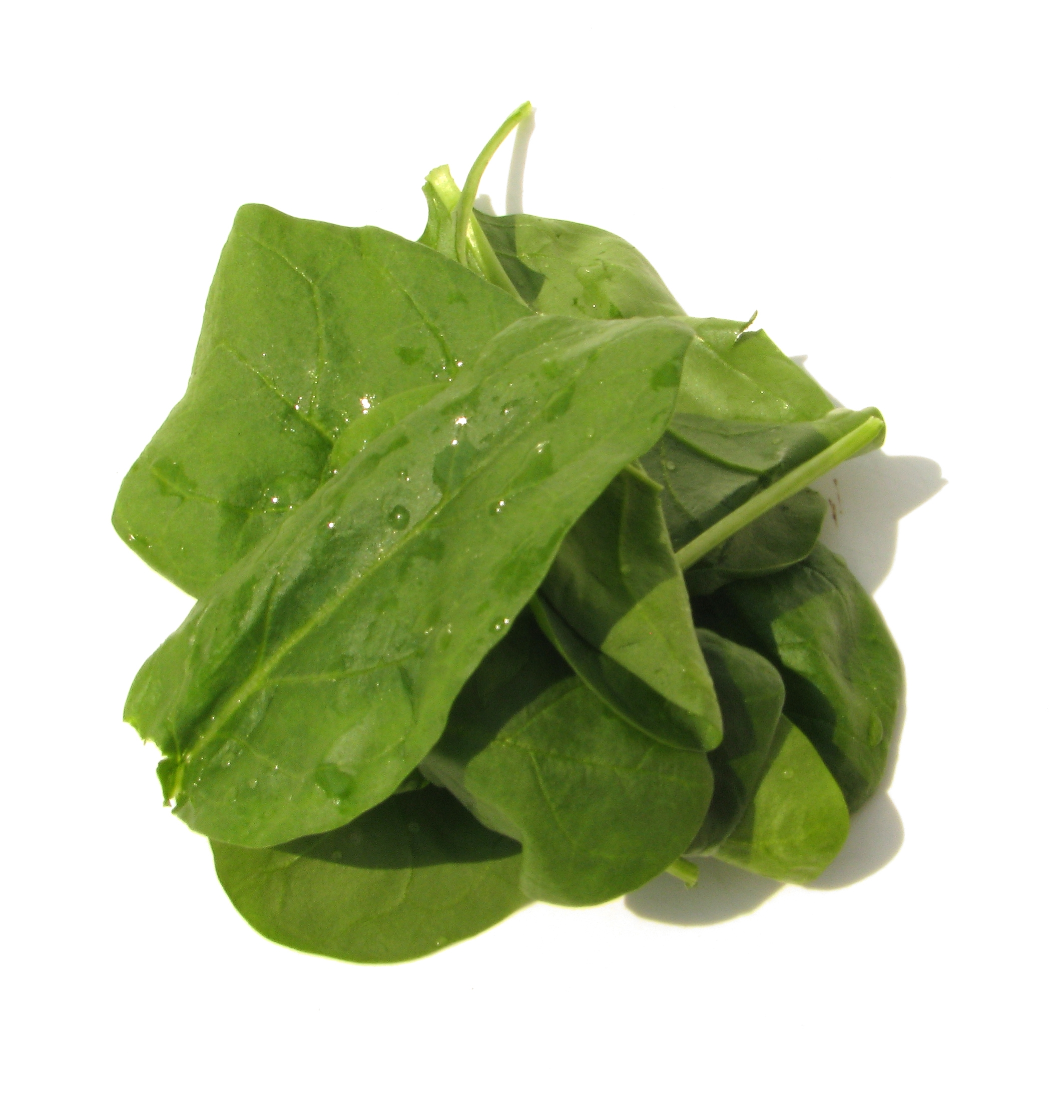 Freshly Picked Bunch of Spinach Leaves | gimmeges