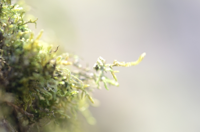 Lichen Planus During Spring Time - Macro