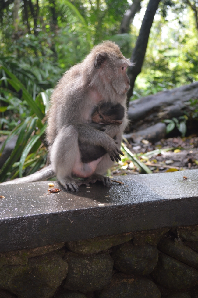 Monkey Holding Its Baby on a Wall