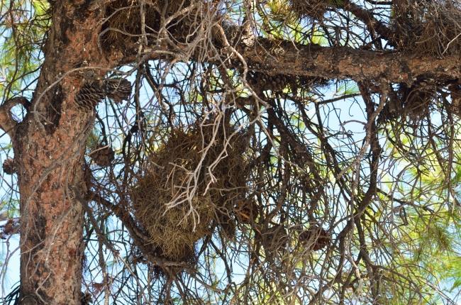 Branches of a Tree with Nest