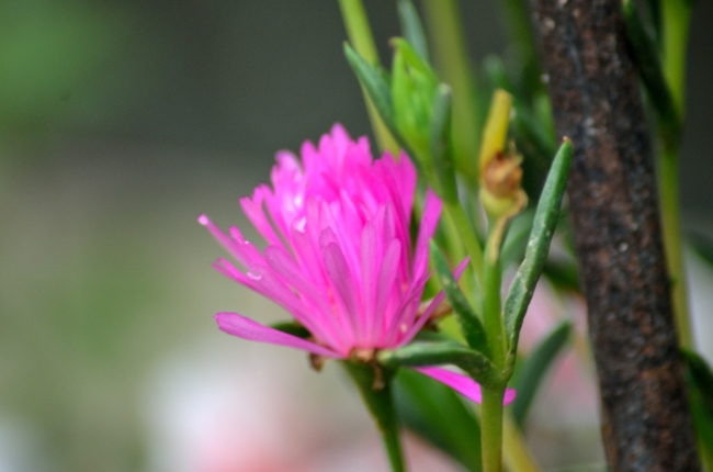 Small Pink Flower near a Larger Tree