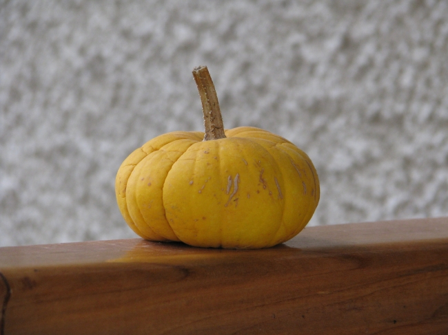Orange Pumpkin on a Wooden Board