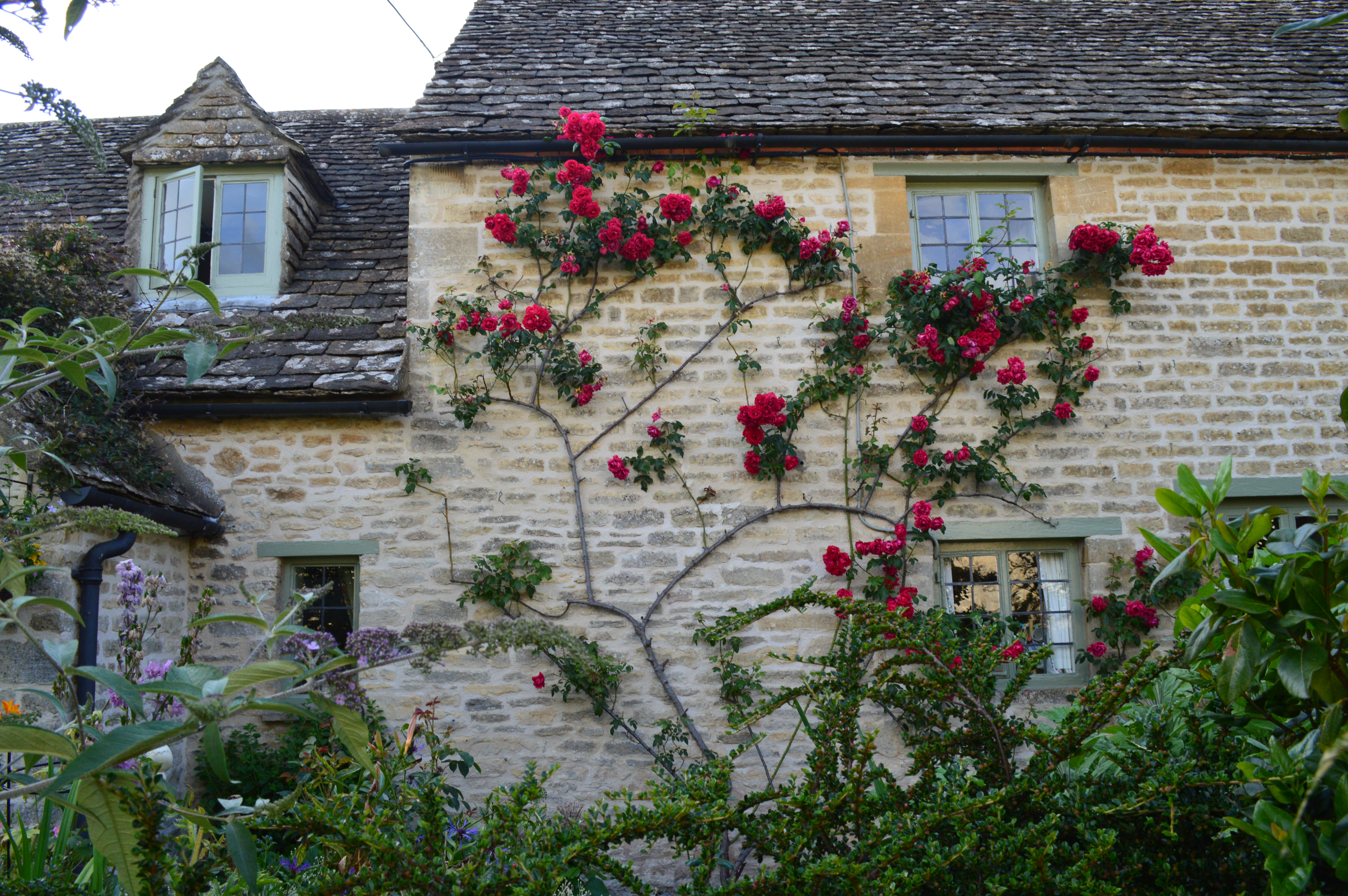 House With Red Climbing Roses Photo