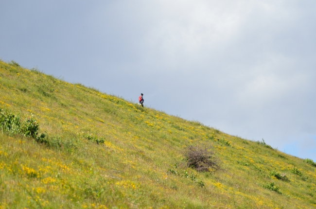 Person Walking Down the Hill