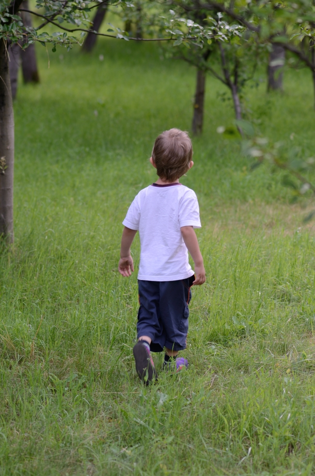 Young Kid Taking a Walk Through a Beautiful Orchard