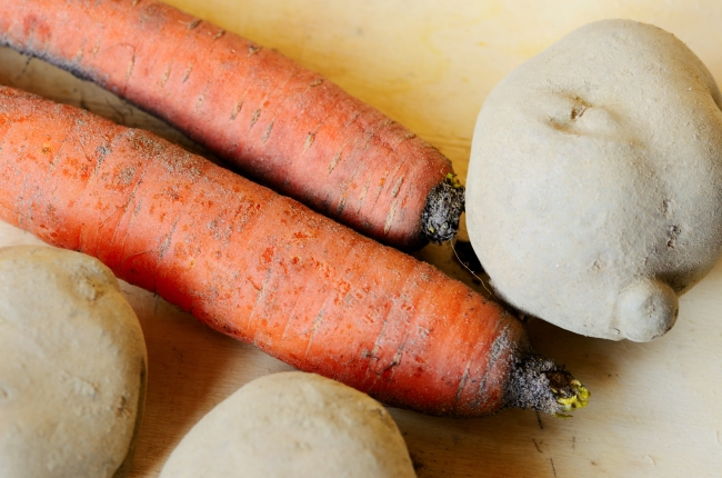 Organic Carrots and Potatoes Freshly Dug