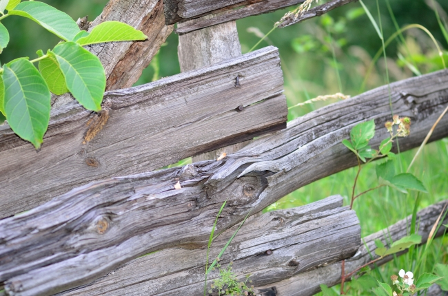 Traditional Wooden Fence in Nature