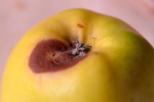 Yellow Apple Close Up