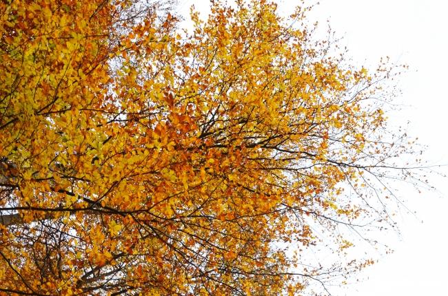 Leaves on White Sky