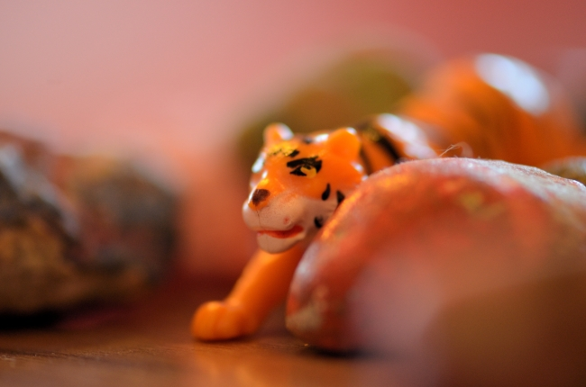 Orange Toy Tiger Bokeh