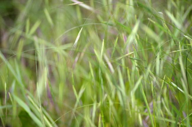 Flowers Grown among Threads of Grass