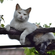 Cat Sitting on a Vine's Branch