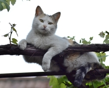 Cat Sitting on a Vine's Branch