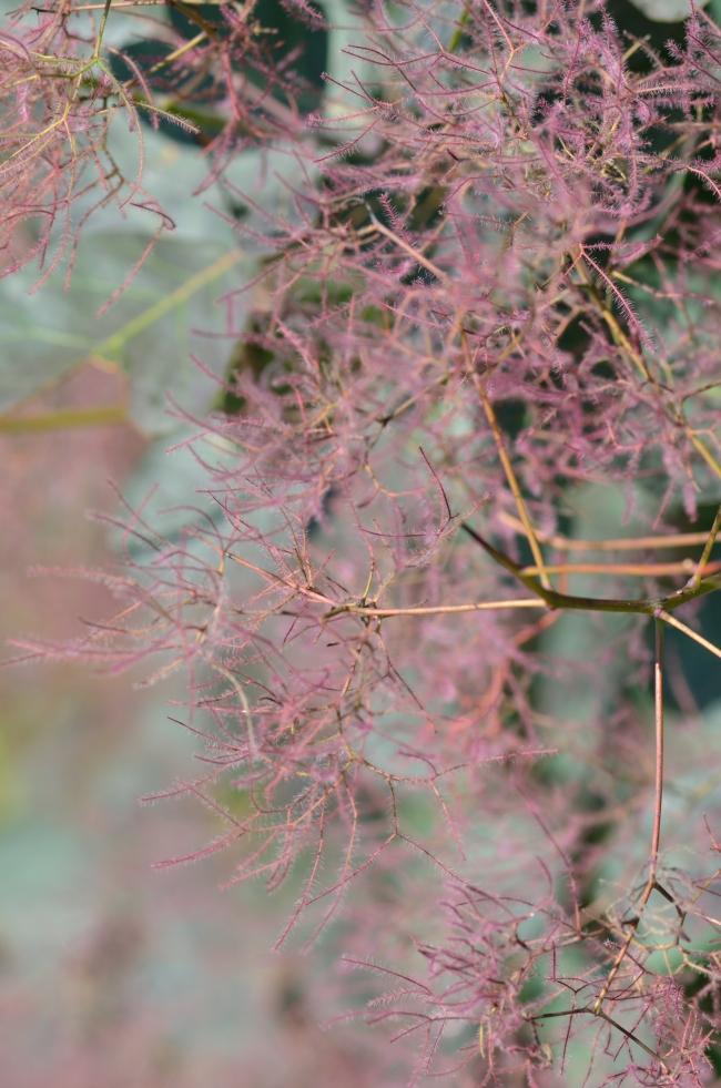 Delicate Vegetal Pink Filaments