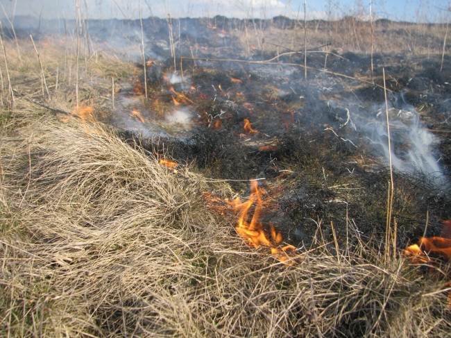 Field with Dry Grass on Fire