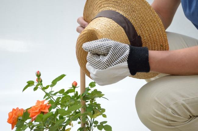 Gardener and Rose