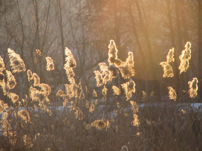 Evening Sunlight over High Grass