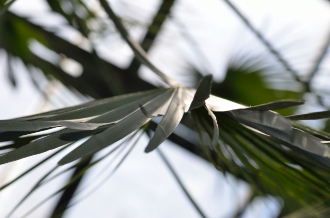 Palm Tree Leaf Detail