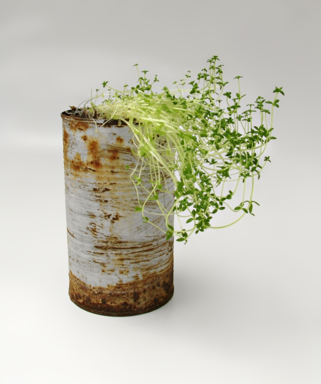 Rusty Pot with Young Plant